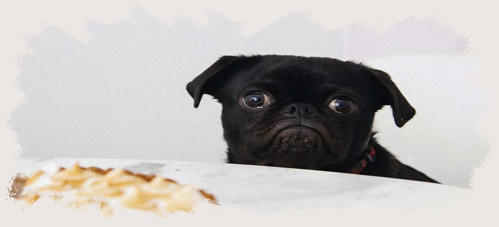 perros celíacos, dieta sin gluten y sin lactosa, dieta sin gluten y sin lácteos, dieta estricta sin gluten, perros intolerantes gluten
