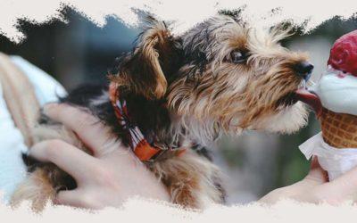 ¿Sabes si tu mascota es celíaca? ¡Te contamos cómo!